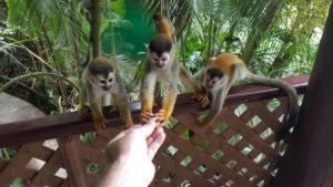 Tischpartner beim Frühstück in der Jungle Villa